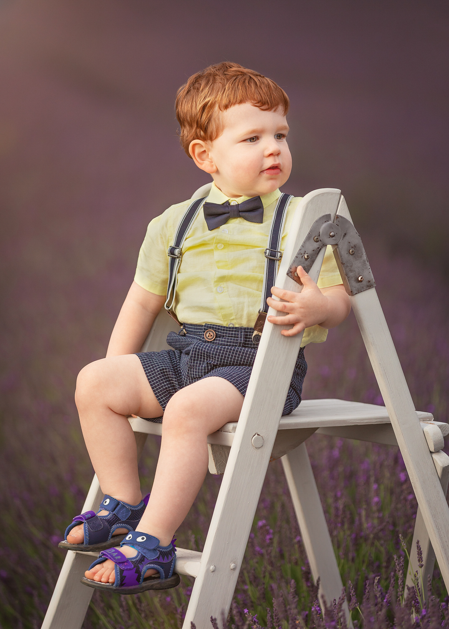 a boy sits on a ladder at his family photo shoot at Hitchin lavender farm